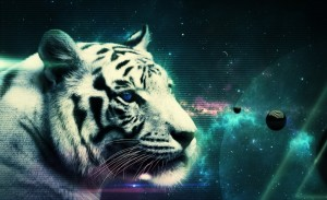 white_tiger_3-wallpaper-960x640